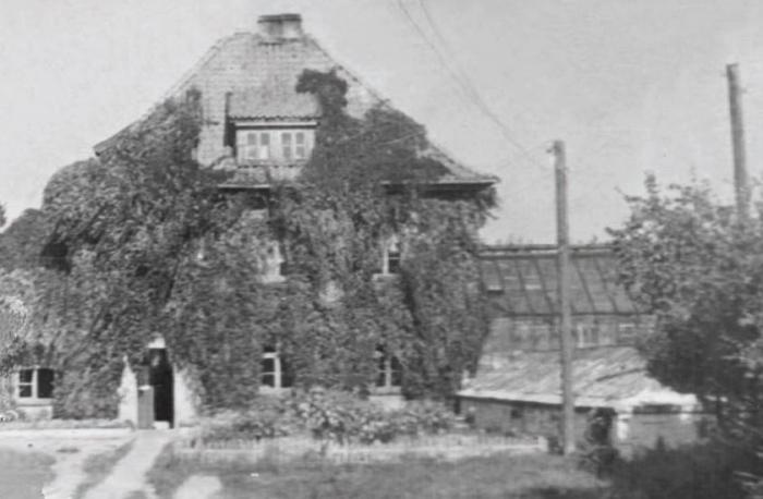 Контора благоустройства. 1950-е годы, Черняховск