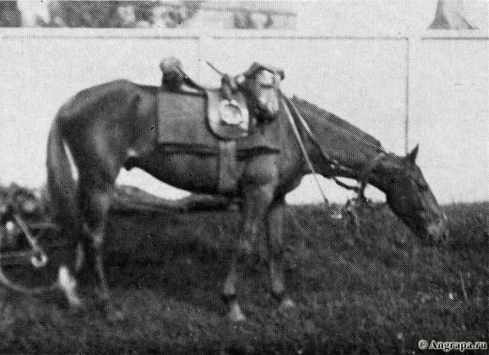 Pferd der «Reitenden», Insterburg