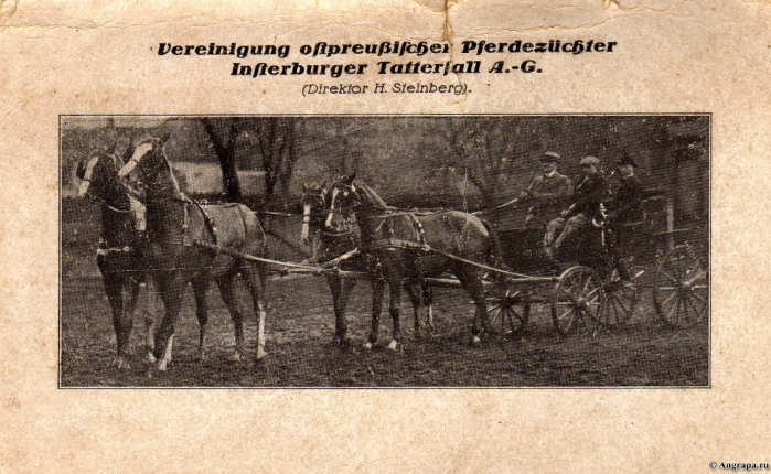 Vereinigung ostpreussischer Pferdezüchter Insterburger Tattersall A.-G. (Direktor H. Steinberg)