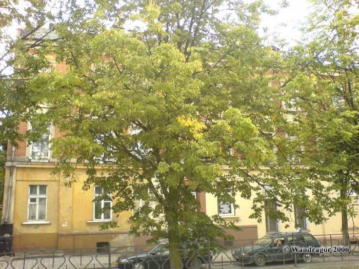 Здание на улице Крупской, Черняховск