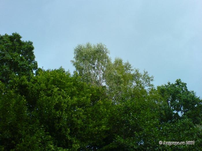 «Зеленый» вид (в районе жилого района по улице Ленинградская), Черняховск