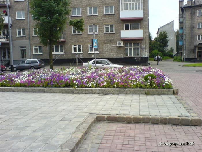 Клумба рядом с памятником Барклаю-де-Толли, Черняховск