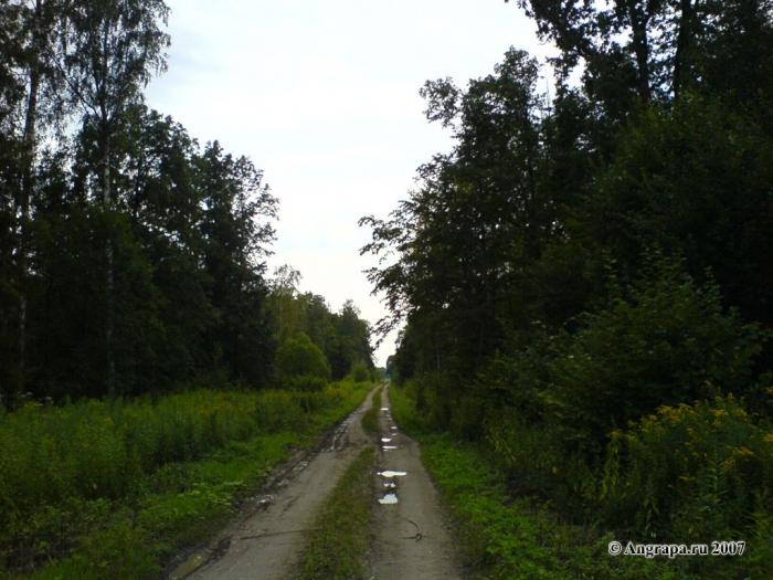 Дорога в лесу, окрестности Черняховска