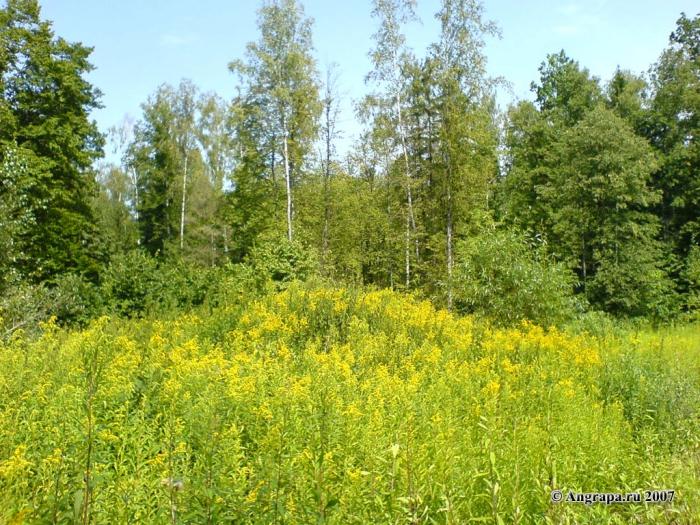 Лес, окрестности Черняховска