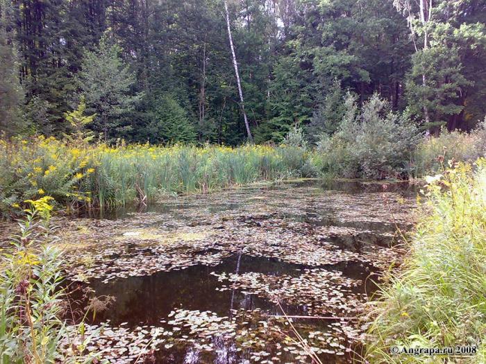 Пруд рядом с лесом, окрестности Черняховска