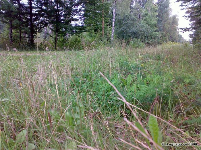 Природа, окрестности Черняховска