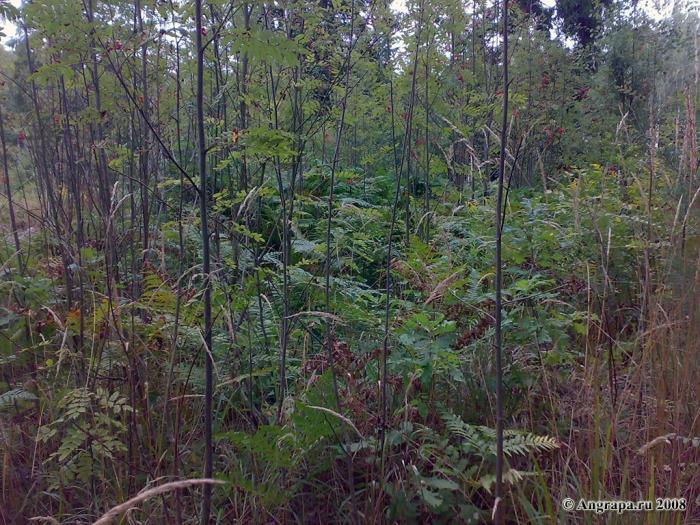 В лесу, окрестности Черняховска