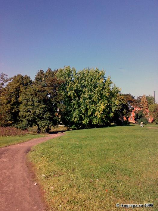 Вид на парк рядом с Замковым прудом, Черняховск